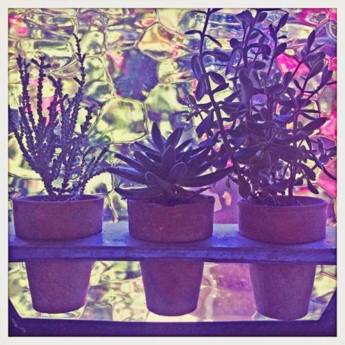 succulent photo orange photography